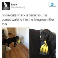 Son snack préféré