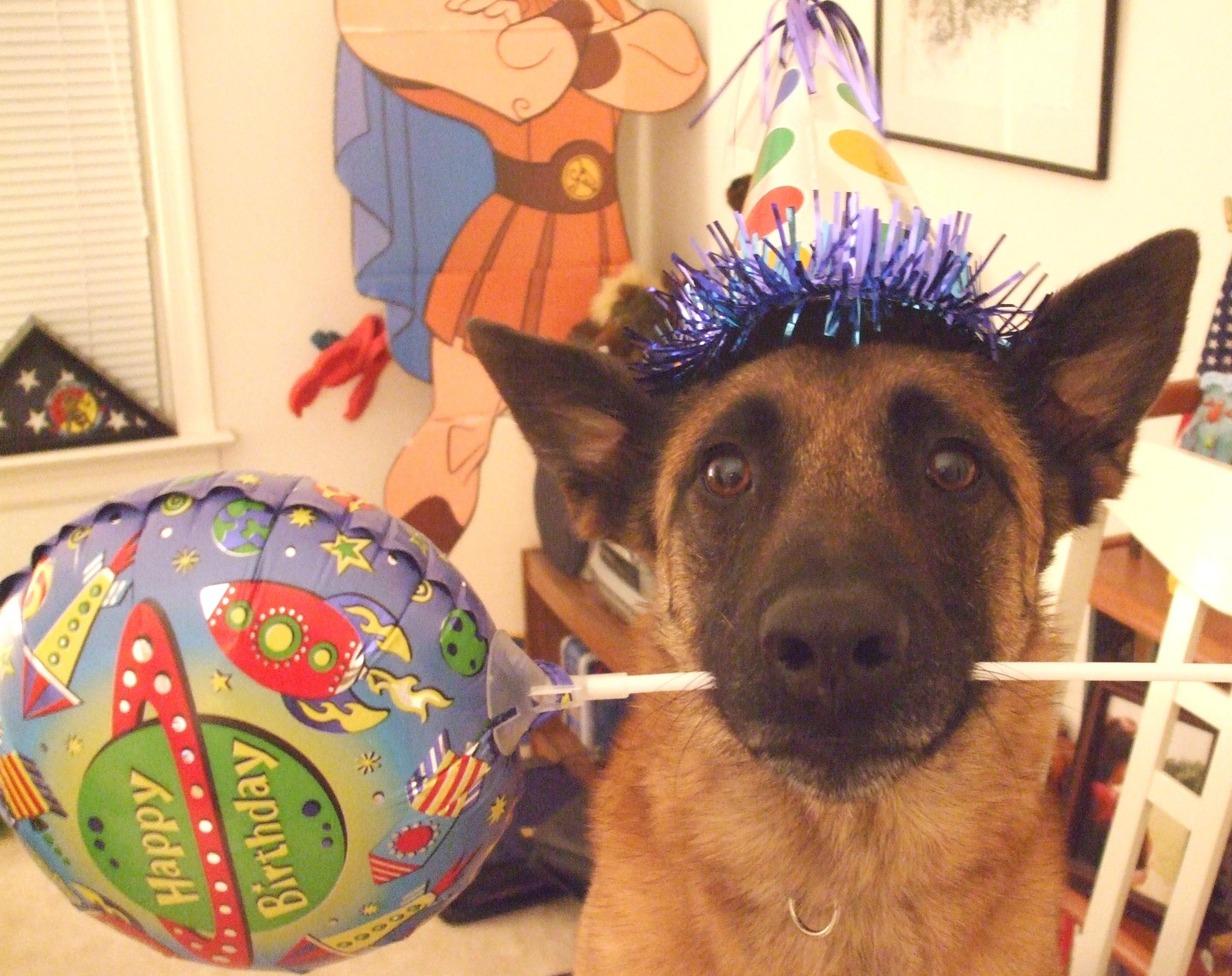 anniversaire de son chien