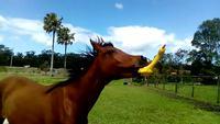 Le cheval et le poulet