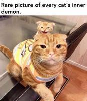 Rare photo du démon intérieur d'un chat