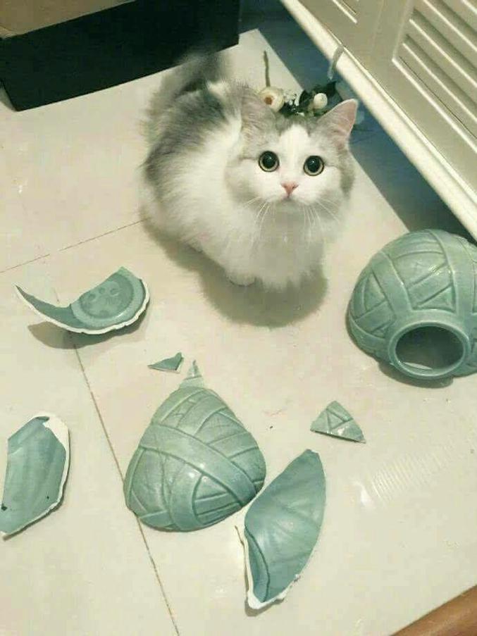 """""""C'est fou ces vases qui tombent tout seuls, hein ?"""""""