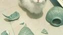 Le chat potier