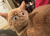 Quand ton chat te tourne le dos