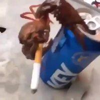 Vices de crabe