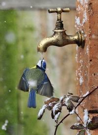 Kan tu as soif en hiver