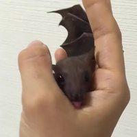 HAHAHA, je suis Batman, je suis la Nuit !