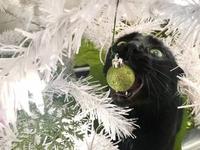 Un avant-goût de Noël