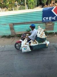 Transport de canards