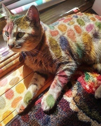 Chat coloré
