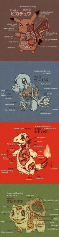 Pokémon Anatomy - Ryan Mauskopf