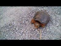 Ne jamais embêter une tortue