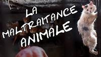 Agissez contre la maltraitance animale