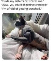 Mec le chat de ma sœur me fait peur