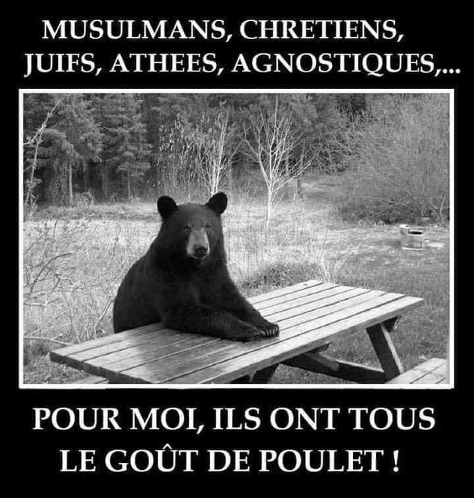Un ours qui met tout le monde d'accord.