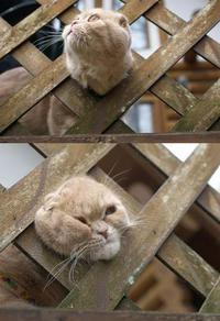 Un chat coincé