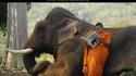 Quand tu viens juste d'acheter un éléphant...