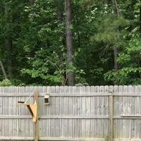 Écureuil volant