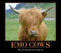 Emo cows