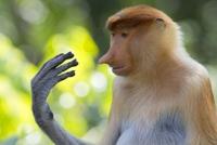 Kan Phil découvre sa main qui lui parle...