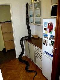 Man ! Y'a une bestiole dans la cuisine !