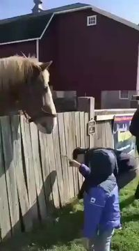 Un cheval rancunier