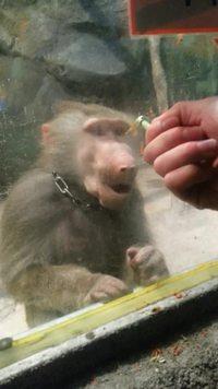 Troller un singe