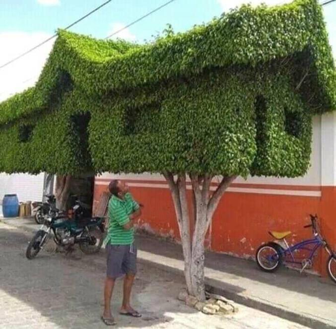 Ou maison arbre...