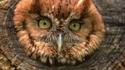 whack an owl