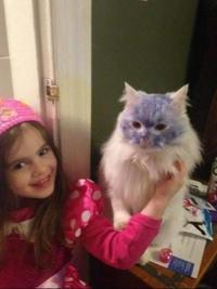 Elle voulait un chat bleu