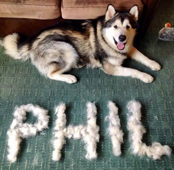 Husky'l est poilu.