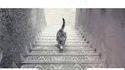 Le chat monte