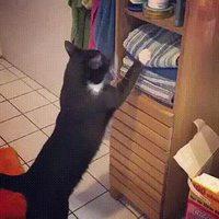 Un chat veut se percher