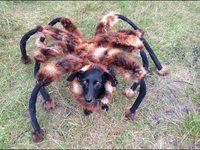 Le croisement entre une araignée géante et un chien