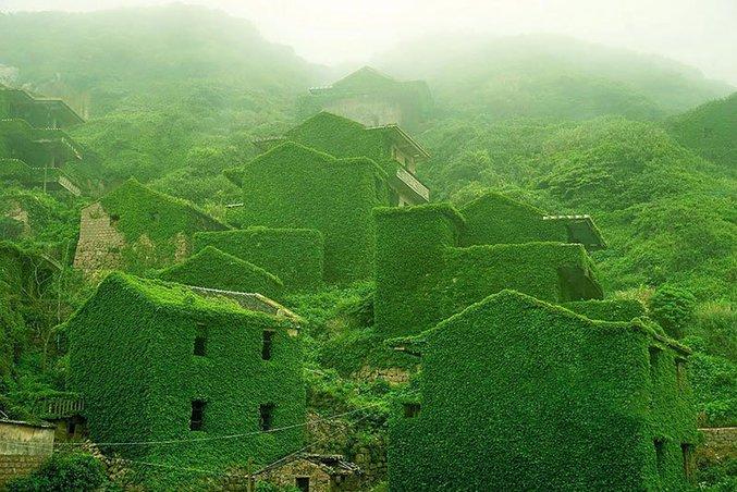 Un village abandonné dans l'archipel de Shengsi en Chine, complètement recouvert par des lierres et d'autre joyeuses plantes invasives. La pêche était l'activité économique principale de l'archipel, mais depuis qu'il est devenu plus rentable de vendre directement sur le continent, les villageois ont peu à peu abandonné les habitations.