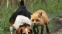 Rox et Rouky IRL
