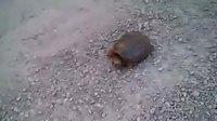 oh quelle est mimi la tortue