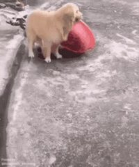 Un bon chien-chien lors d'une canicule