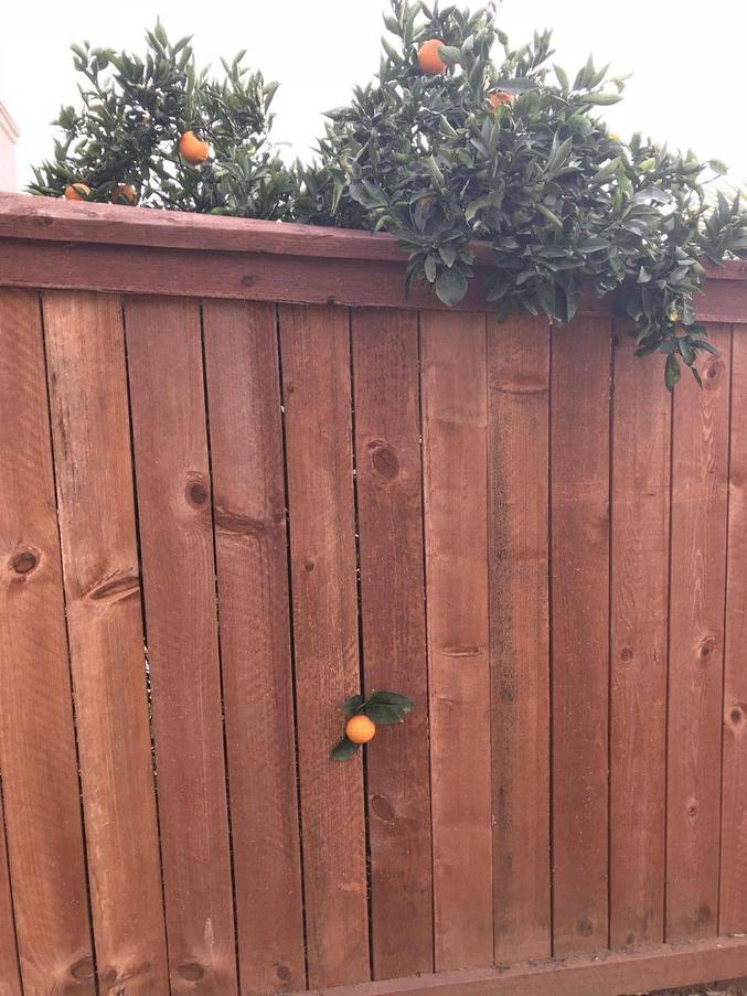 Une orange se fait la malle. I am fruiiiit !