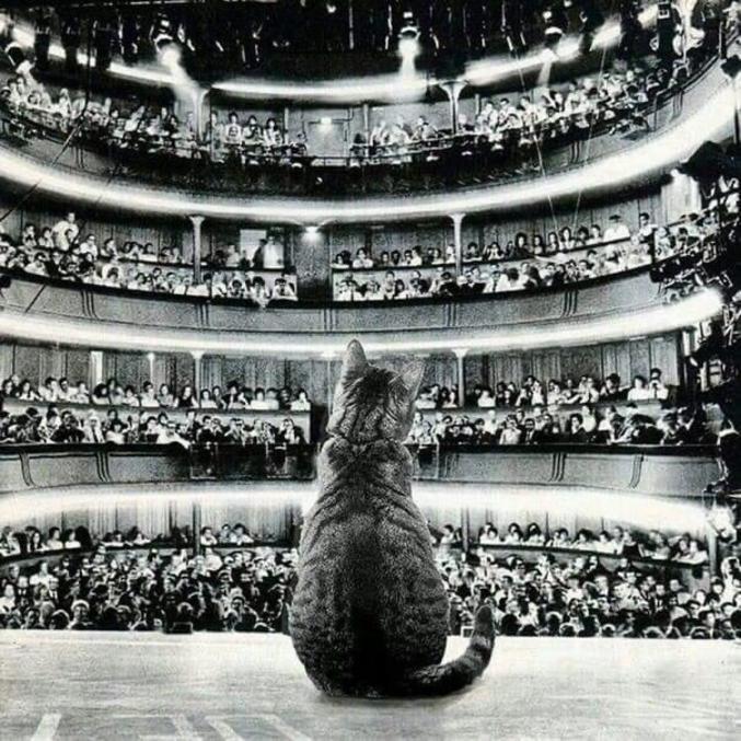 ...le chanteur a un chat dans la gorge !