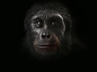 6 millions d'années d'évolution du faciès humain en 2 minutes