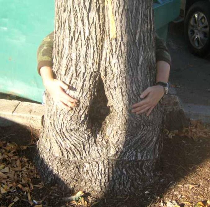 Goatse avec un arbre.