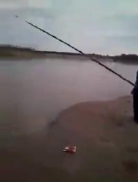 Du gros poisson