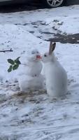 Un bonhomme de neige et un lapin s'aimaient d'amour tendre