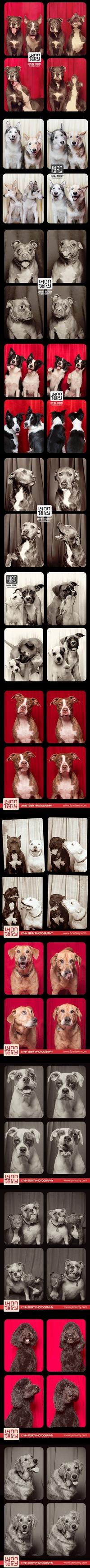 Photomaton pour chiens