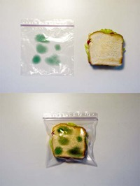 Touche pas à mon sandwich