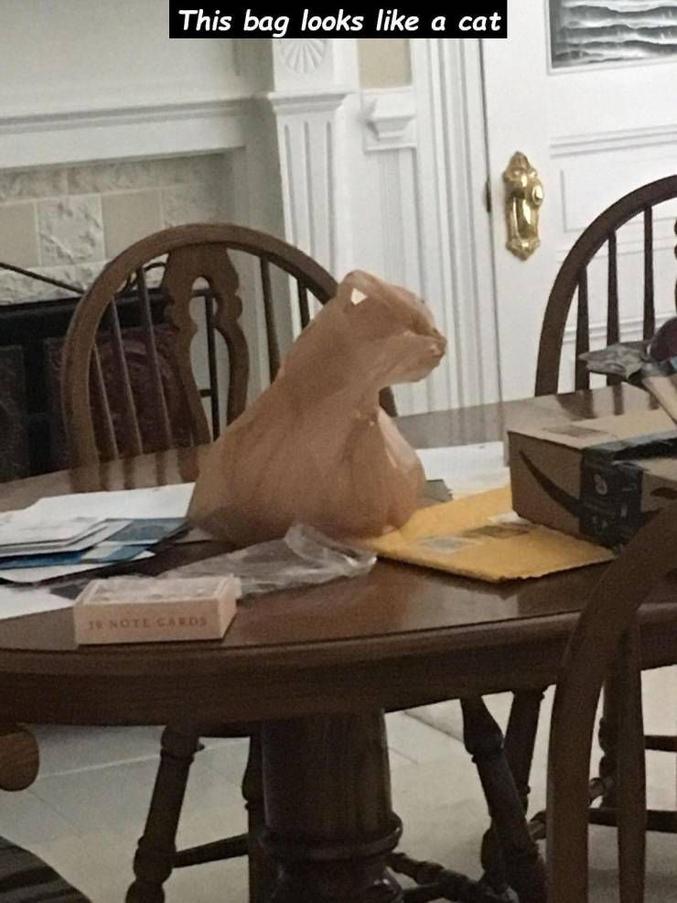 Un sac en plastique qui ressemble à un chat.