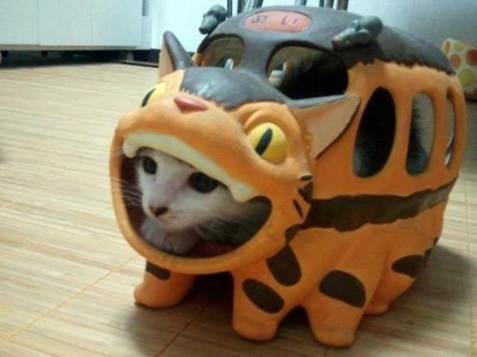 I heard you liek catbuses and cats, so I put a cat in your catbus!