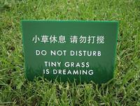 La petite herbe rêve...