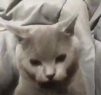 Je ne suis pas un chat facile !