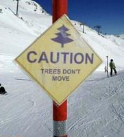 Attention, les arbres ne bougent pas !